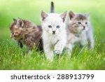 Group Of Three Little Kittens