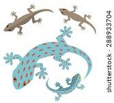 Home Lizard And Gecko Lizard In ...