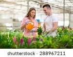 Couple Working In Greenhouse...