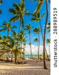 jamaica  beach  mauritius. | Shutterstock . vector #288989519