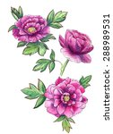 watercolor peonies with a black ... | Shutterstock . vector #288989531