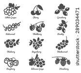 berries cherry grape currant... | Shutterstock .eps vector #289034471