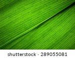 Macro Photo Of Leaf Texture