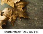 Dry Maple Leaves On Rusty Wood...