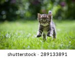 Stock photo cute little kitten jumping on green grass 289133891