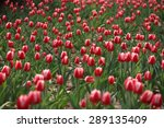 the tulip | Shutterstock . vector #289135409