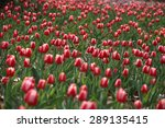 the tulip | Shutterstock . vector #289135415