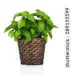 basil herbs in pot on white... | Shutterstock . vector #289155599