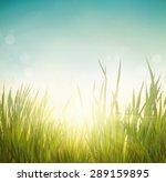 Spring Grass. Blur Background....