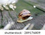 snail in the garden on the table | Shutterstock . vector #289176809
