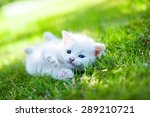 Stock photo white kitten walking on the grass 289210721