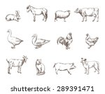 vector sketch of twelve farm... | Shutterstock .eps vector #289391471