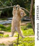 Stock photo  funny kitten 28953364