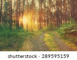 sunset in the forest  dirty... | Shutterstock . vector #289595159