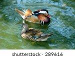 Pair Of Mandarin Duck