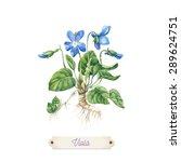 Botanical Watercolor. Vector...