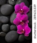 Three Purple Orchids  Lying On...