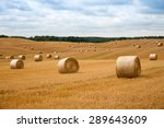 Round Straw Bales In Harvested...