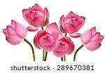 Beautiful Lotus Flower Isolate...