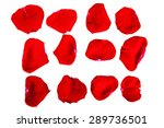 the isolated red rose petals on ... | Shutterstock . vector #289736501