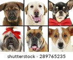 collage of different dogs | Shutterstock . vector #289765235