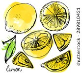 lemons black line drawn on a... | Shutterstock .eps vector #289810421