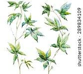 Watercolor Vine Leaves  Set Of...