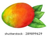 watercolor mango fruit whole...