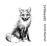 Fox Engraved Illustration....