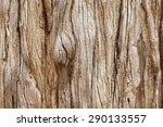 Weathered Tree Trunk Textured...