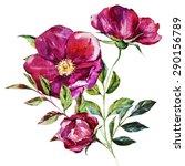 Watercolor Floral Print Rose ...
