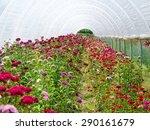 flower greenhouse | Shutterstock . vector #290161679