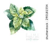 watercolor mint. hand draw mint ... | Shutterstock .eps vector #290181554