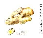 watercolor ginger root. hand... | Shutterstock .eps vector #290181701