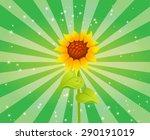 Beautiful Sunflower Radiating...