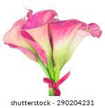 Bouquet Of Calla Lilly Flowers...