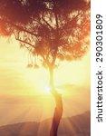 beams of sunset sun filtering... | Shutterstock . vector #290301809