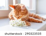 Ginger Cat Smells A Bouquet Of...
