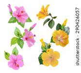 Set Hibiscus Flowers. Pink And...