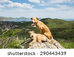 dogs sitting on a large rock on ... | Shutterstock . vector #290443439