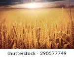 wheat field | Shutterstock . vector #290577749