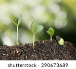 plant grow and bokeh background ... | Shutterstock . vector #290673689