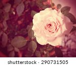 beautiful roses background made ... | Shutterstock . vector #290731505