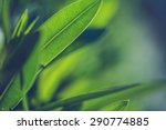 green fresh plants grass... | Shutterstock . vector #290774885
