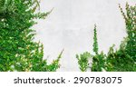 Green Creeper Plant On White...