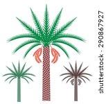 Palm Tree Set. Isolated Palm...