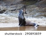 A Sea Lion On The Beach At...