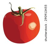 whole tomato | Shutterstock .eps vector #290913455