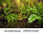 wild tropical forest landscape... | Shutterstock . vector #290915165