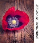 Red Poppy Flower On An Old...